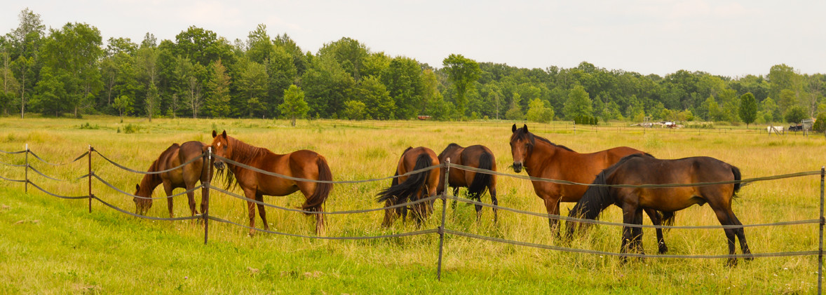 5 horses grazing in a pasture